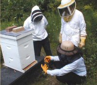 Students in beekeeping suits standing around a hive
