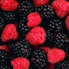 Photo of red and black raspberries