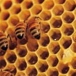 bee-picture.jpg Thumbnail