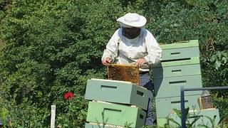 beekeeper-941688__180