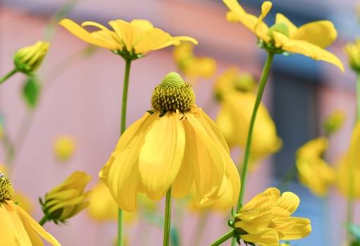 nature-flowers-summer-garden-medium