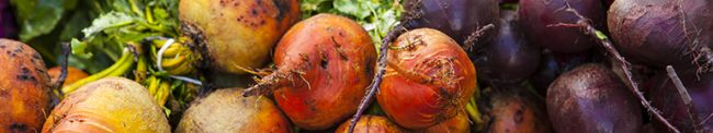 organic golden and purple beets, Farmers Market