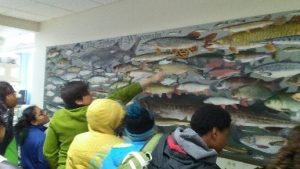 Tech Wizards explore fish mural at UW Milwaukee