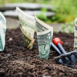 Rolled up dollar bills planted in soil.