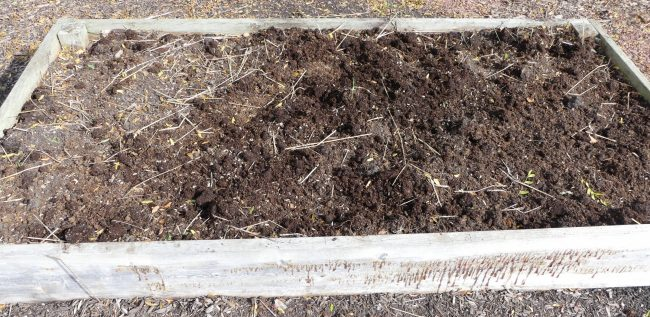 Prepare your garden beds for winter by removing any plants that remain.